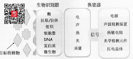 生物传感器响应机理
