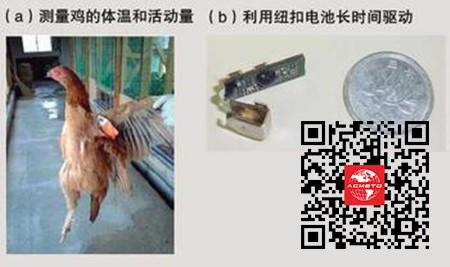 用于预防禽流感的无线传感器系统